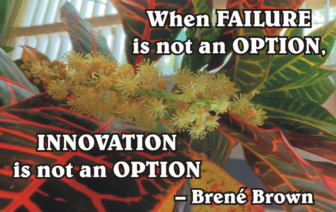 Failure-an-option